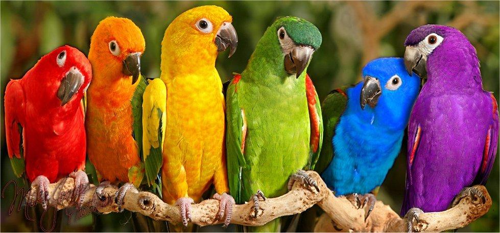 Bienvenue a tous  Perroquets